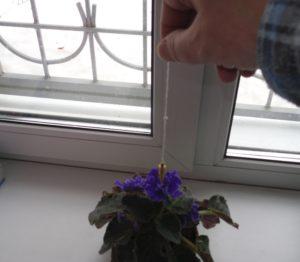 маятник и растения 1