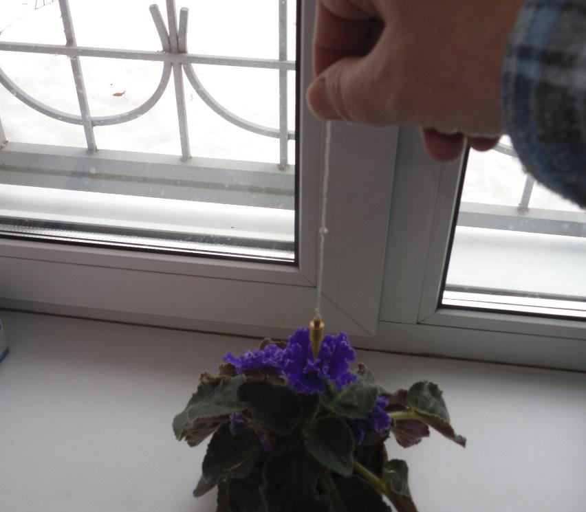 Маятник и растения. Маятник может оказать помощь и растениям. Как можно использовать маятник в сельском хозяйстве при посадке и выращивании растений