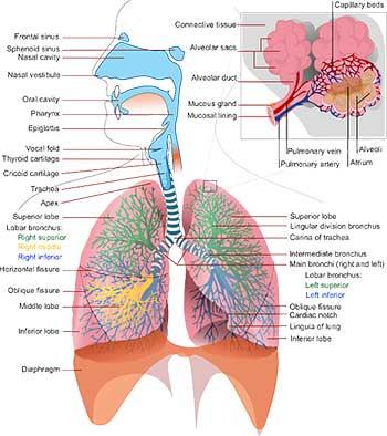 Маятниковый способ диагностики болезней 2
