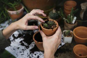 маятник и растения 2