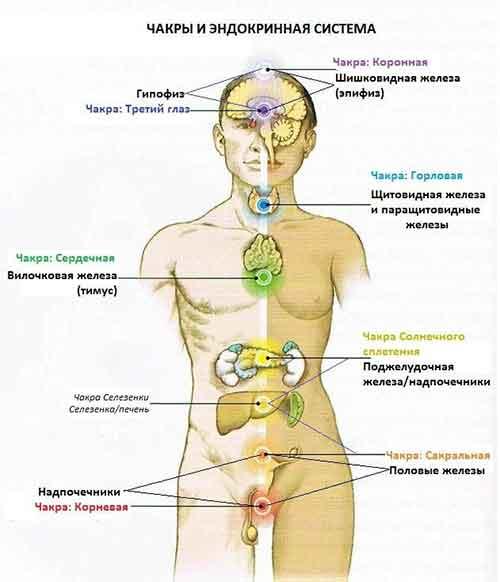Про энергетику человека идет много разговоров. Многие не знают где точно находятся тонкие тела. Попробуйте и вы сами прочувствуете их местоположение.