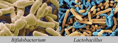 Лечение дисбактериоза народными методами