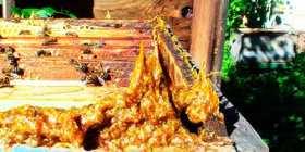 lechebnye-svojstva-propolisa-i-primenenie