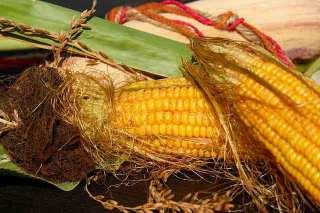 Кукурузные рыльца полезные свойства и противопоказания